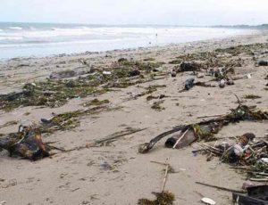 отливы являются изменением уровня воды у берега