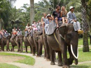 В программу экскурсии включено представление молодых слоников