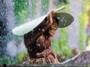 Дожди по месяцам