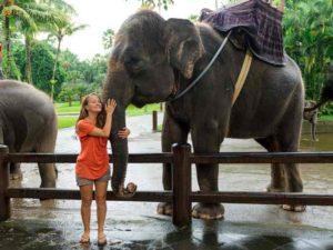Деревня слонов – расположена в центральной части парка