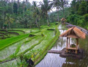 Что посмотреть на Бали самостоятельно и с экскурсией