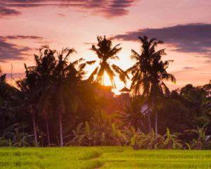Многие люди мечтают попасть на остров Бали, считая его райским местом. В этой статье я хочу рассказать вам о минусах Бали.