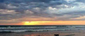 В это время на берегу много собак