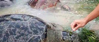 По этой же причине значительно пострадала морская экологическая система побережья