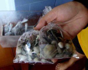 кто хочет испробовать на себе действие балийских грибов